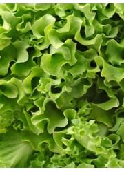 Салат Бионда Триест листовой 1.5 гр