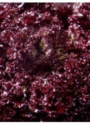 Салат Гранатовый сад 0.5 гр