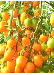 Помидоры Банан оранжевый 0.1 гр