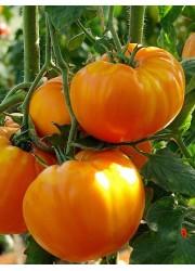 Томат Оранж 0.5 гр
