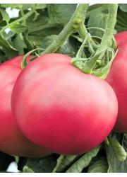 Томат Розовый Мясистый 0.1 гр