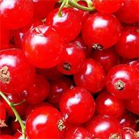 Красная смородина сорт Валентиновка