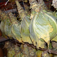 Хранение капусты - повешивание