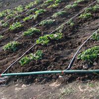 Организация полива капусты