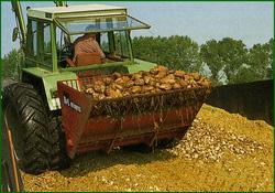 Силосование кормовой свеклы и кукурузы