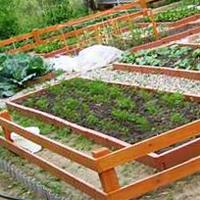 Участок для овощей